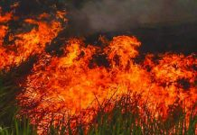 More than 1,000 firefighters battled three blazes sweeping across central Portugal early on Sunday, July 21, 2019 prompting authorities to partially evacuate a village and leaving one person with severe injuries. NSTP Archive