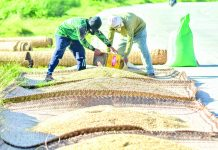 Agricultural output contracted by 1.27 percent in April to June. Crop production was led by a decline in palay output, which fell by 5.82 percent. IAN PAUL CORDERO/PN