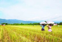 The expanded Survival and Recovery Assistance program (SURE Aid) stands at P2.5 billion following an infusion of P1-billion fund. Department of Agriculture secretary Dar said SURE Aid is aimed at providing loan assistance for immediate relief to rice farmers affected by the impact of low palay prices as a result of the rice tariffication law, or Republic Act 11203. UN NEWS
