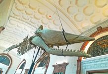 The skeleton of a 43.5-feet Marinduque Sperm Whale suspended from the ceiling at the museum's entrance.