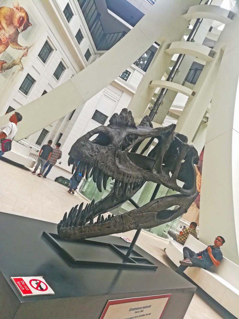 The life-size replica of a Tyrannosaurus rex skull.