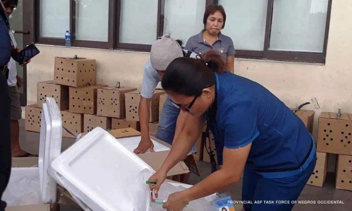 """An officer of the Provincial African Swine Fever Task Force-Negros Occidental inspects a box loaded with illegal pork products in Bacolod City. The task force seized a total of 8,640 packs of """"siopao"""" or 51,840 pieces of pork buns that came from Mandaue City, Cebu on Wednesday. PROVINCIAL ASF TASK FORCE OF NEGROS OCCIDENTAL"""