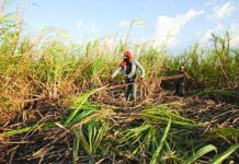 Stakeholders laud on Tuesday the passing of Senate Resolution 213 opposing the planned liberalization of the sugar industry. PNA