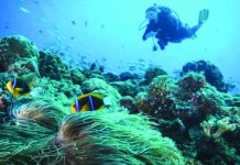A diver among the corals in Palau. GLOBAL_PICS