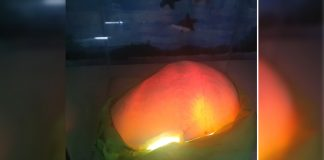 A giant pearl weighing about 13.75 kilos is displayed at a restaurant in Kalibo, Aklan in this photo obtained from a video. JUN AGUIRRE/PN
