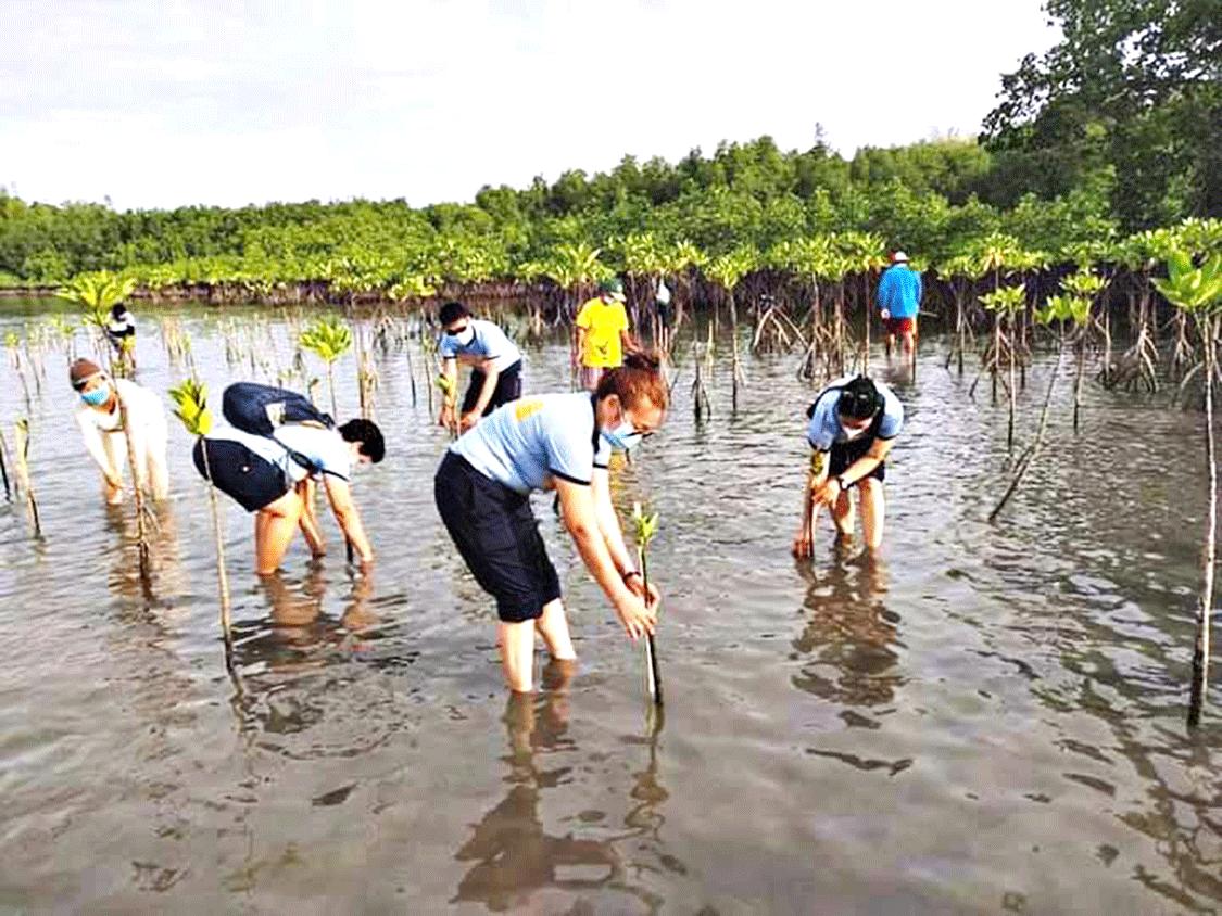 region-ime-mangrove